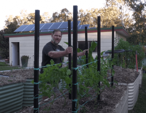 Tomato Stakes recycled plastic